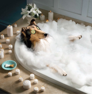 dog_in_spa_bath.jpg