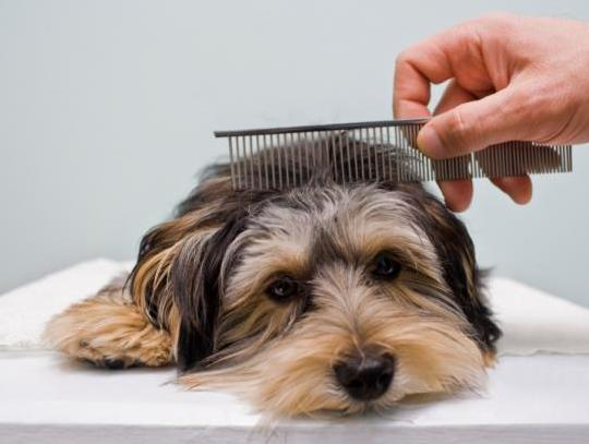 puppy_with_comb_9842.jpg